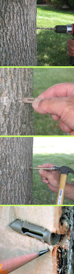 Tree Care Products